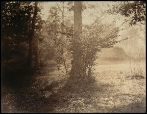 Tree Study, Forest of Fontainebleau gustave le gray 1856