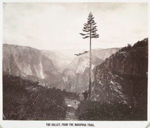 The Valley, From the Mariposa Trail, 1864, Charles L. Weed